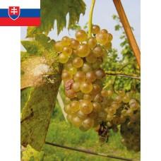 Chardonnay Výber z hrozna 2016 Suché Víno Bognár